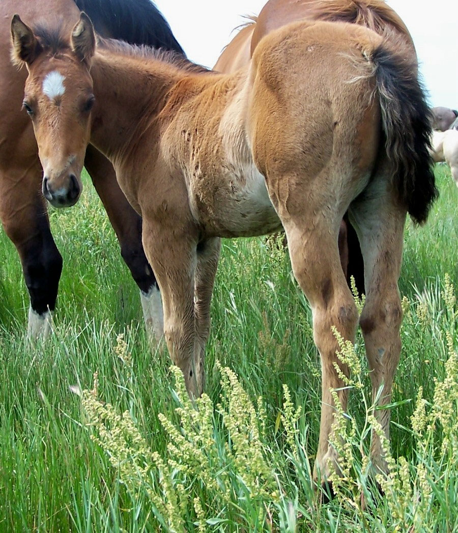 Q Horses For Sale Gumbo Quarter Horses -...